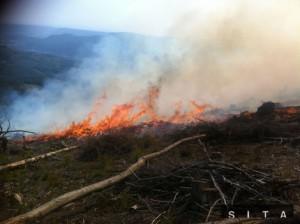 Lesný požžiar v ťažko prístupnom teréne nad Betliarom a Gemerskou Polomou. Požžiar v lese postihnutom kalamitou spozorovali 6. augusta o druhej popoludní. Autor: SITA/AP, Eva Viestová